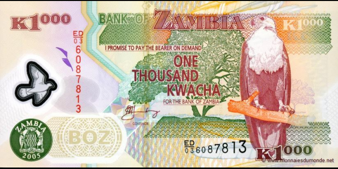 Zambie-p44d